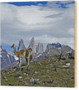 Guanacos In Torres Del Paine Wood Print