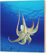 Hawaii, Day Octopus Wood Print by Dave Fleetham - Printscapes