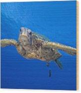 Hawaii, Green Sea Turtle Wood Print