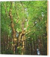 Hazelwood Co Sligo Ireland  Wood Print