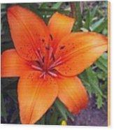 Hemerocallis Flower Wood Print