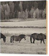 Horses Of The Fall  Bw Wood Print