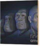 Human Evolution Wood Print