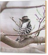 Img_0001 - Downy Woodpecker Wood Print