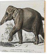 Indian Elephant, Endangered Species Wood Print