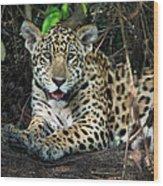 Jaguar Panthera Onca, Pantanal Wood Print