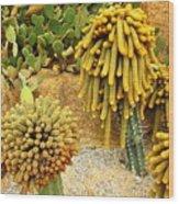 Kaktus Wood Print