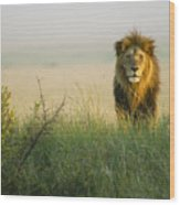 King Of The Savanna Wood Print