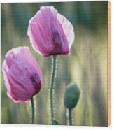 Lilac Poppy Flowers Wood Print