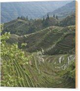 Longsheng Rice Terraces Wood Print