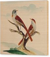 Lord's Entire New System Of Ornithology Wood Print