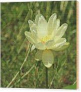 Lotus Flower In Bloom  Wood Print