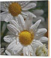 Marguerite Daisy Wood Print