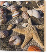 Mix Group Of Seashells Wood Print