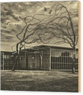 Modern Art Museum Of Fort Worth Wood Print