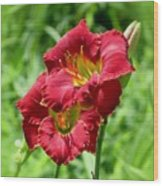 Red Lily Pair Wood Print