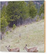 Mule Deer In The Pike National Forest Wood Print