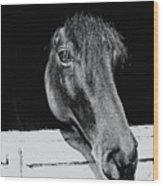 Noble Stallion  Wood Print