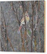 Northern Female Cardinal  Wood Print