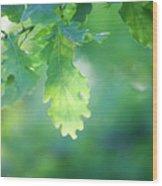 Oak Branch Wood Print