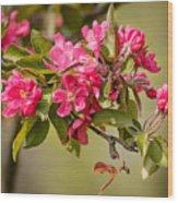 Paradise Apples Flowers Wood Print
