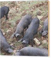 Pigs Wood Print