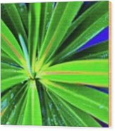 Plants And Flowers In Hawaii 547 C Wood Print
