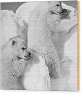 Polar Bear Cubs Wood Print
