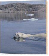 Polar Bear Swimming Wager Bay Canada Wood Print