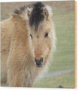Pony On Dartmoor Wood Print