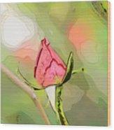 Red Garden Rose Bud Wood Print