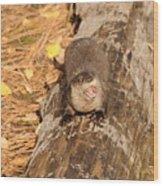 River Otter Wood Print