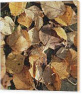 Silver Birch Leaves Lying On A Brick Path In A Cheshire Garden On An Autumn Day   England Wood Print
