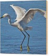Snowy Egret In Flight Wood Print