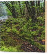Spring Along Elk River Wood Print