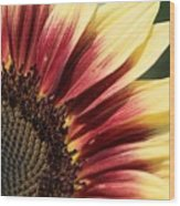 Sunflower Named Ruby Eclipse Wood Print