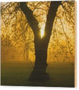 Sunrise Trees Fog Wood Print
