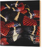 Surinam Coralsnake Wood Print