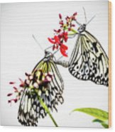 The Extraordinary Rice Paper Butterfly A Series Wood Print