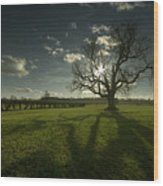 The Lonely Tree Wood Print