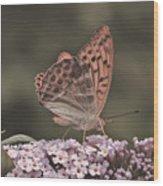 Tramonti Butterfly Wood Print
