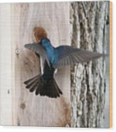 Tree Swallow Wood Print