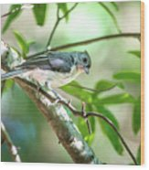 Tufted Titmouse In The Wilds Of South Carolina Wood Print