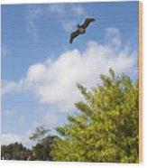 Turkey Creek In Palm Bay Florida Wood Print