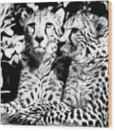 Two Cheetahs Wood Print