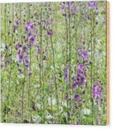 Verbascum Phoeniceum In The Meadow Wood Print