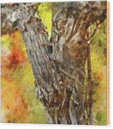 Vine Wood Print