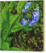 Virginia Bluebell Wood Print