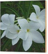 3 White Beauties Wood Print