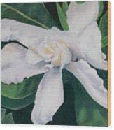 White Camelia Wood Print by Lucinda  Hansen